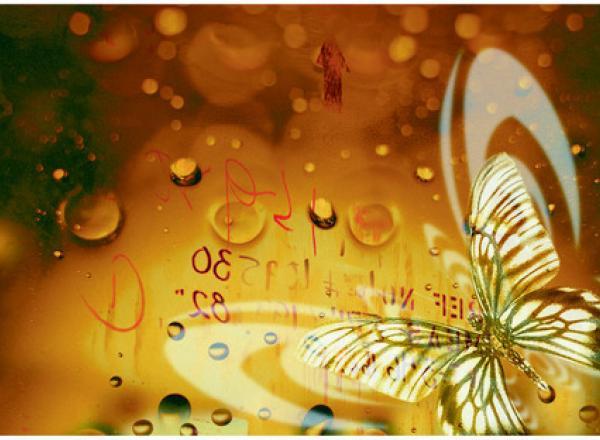 """Стеновая панель с фотопечатью """"Золотые бабочки"""""""