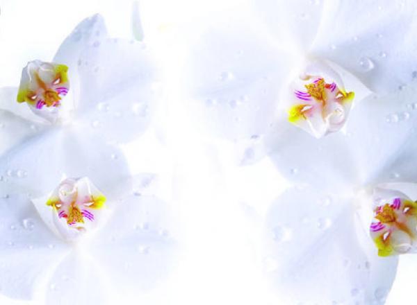 """Стеновая панель с фотопечатью FM16 """"Серые орхидеи"""""""