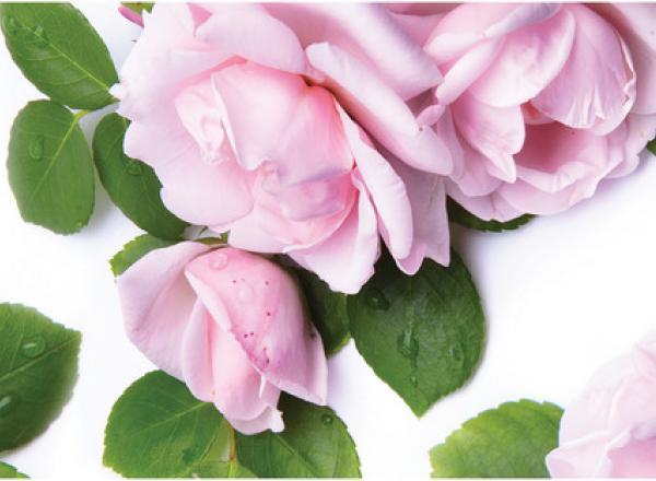 """Стеновая панель с фотопечатью """"Сиреневые розы"""""""