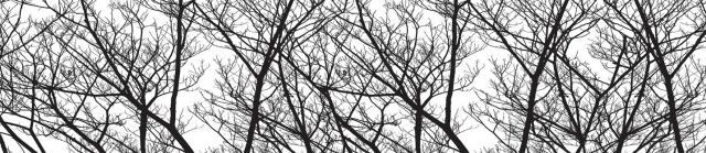 """Стеновая панель  с фотопечатью """"Деревья"""""""