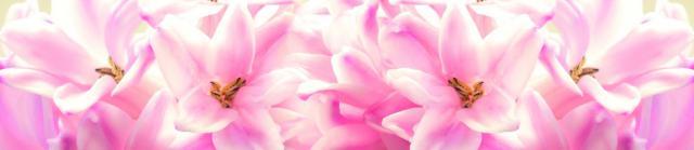 """Стеновая панель с фотопечатью """"Розовые лилии"""""""