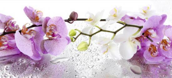 """Стеновая панель с фотопечатью """"Розовые орхидеи"""""""