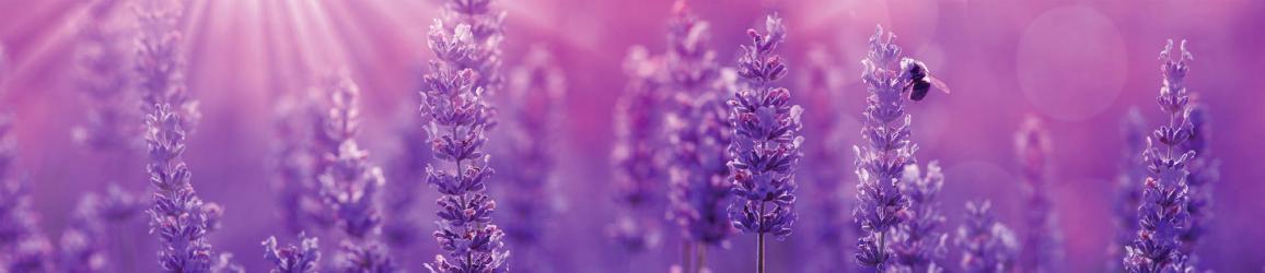 """Стеновая панель SP156 """"Цветы лаванды"""""""